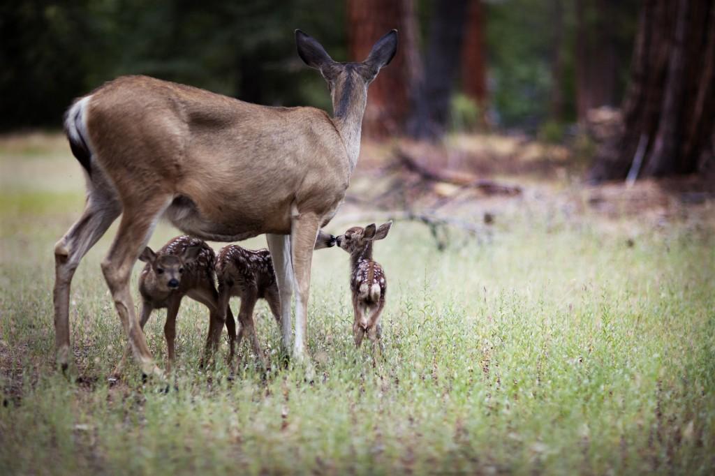 Newborn baby deer 3