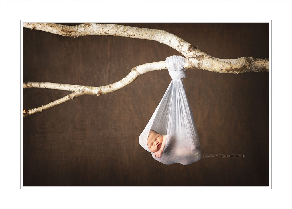 hanging baby tree branch